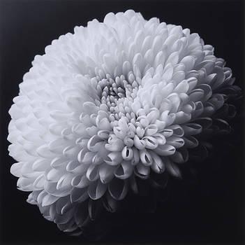Flower 08 by Haruo Kaneko