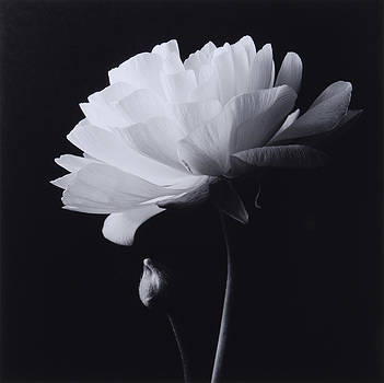 Flower 09 by Haruo Kaneko