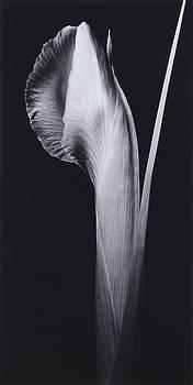 Flower 13 by Haruo Kaneko
