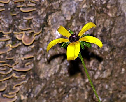 Flower and Bark by Susan Leggett