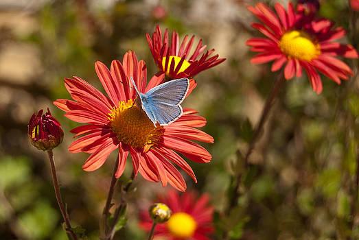 Flower and Butterfly by Mariana Atanasova