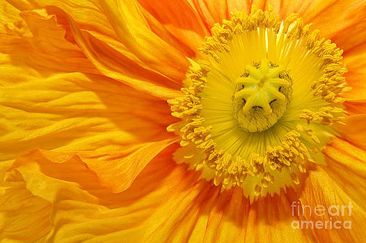 Angela Doelling AD DESIGN Photo and PhotoArt - Flower