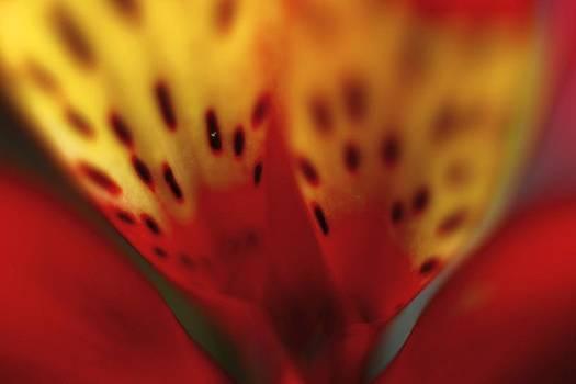 Flower Art by Max  Greene