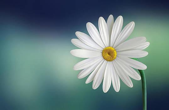 Flower by Bess Hamiti