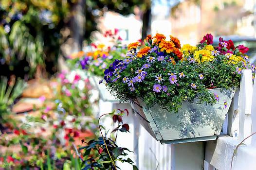 Flower Box and a Picket Fence by Lynn Jordan