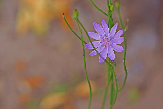 Flower Buds  by Felix Santos