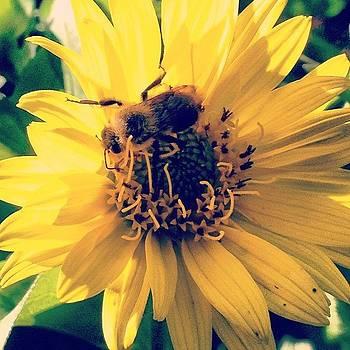 #flower #bumblebee #nature #savethebees by Megan Rudman