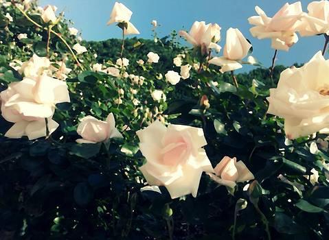 Flower Bush  by Kiara Reynolds
