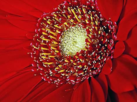 Flower Closeup by Nancie Rowan