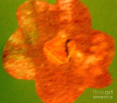 Flower by Dorothy Rafferty
