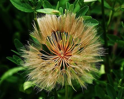 Flower Explosion by Pierre Labrosse