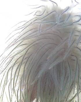 Ramona Johnston - Floral Feathers