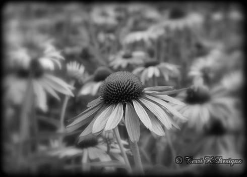 Flower Field by Terri K Designs