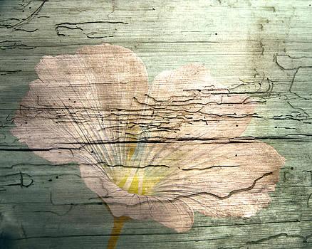 Randall Branham - Flower figment