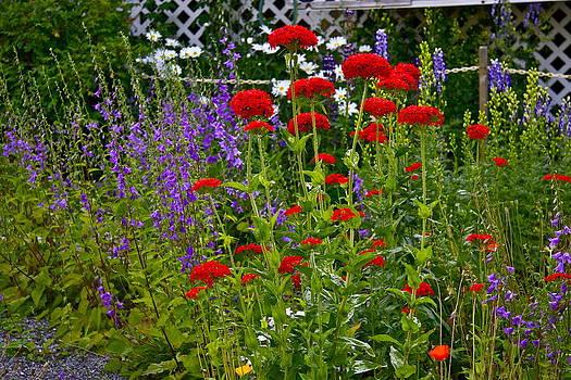 Flower garden by Johanna Bruwer