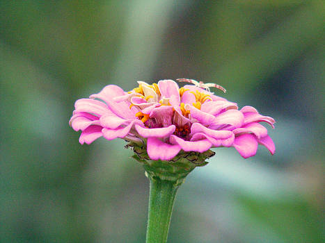 Flower Gazer by Making Memories Photography LLC