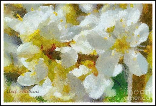 Flower in my garden 2010 by Arif Zenun Shabani