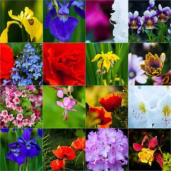 Matt Dobson - Flower Macro Montage