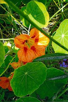 Flower Medley by Robert Bray