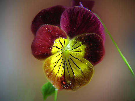 Flower No. 4 by Phil Penne