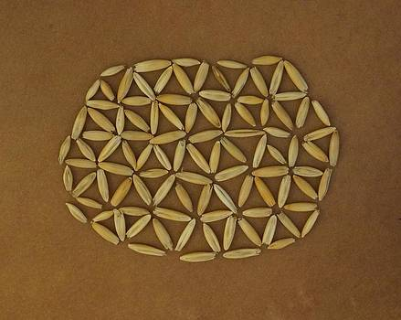 Flower of Life by Jon Simmons