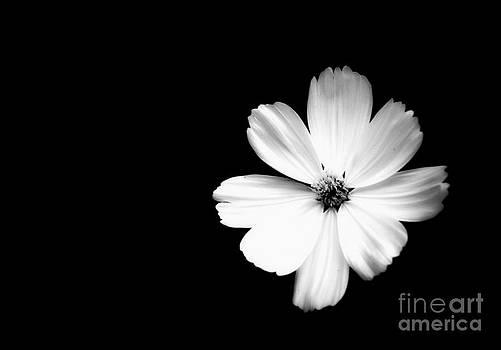 Flower of Mine by Alex Blaha