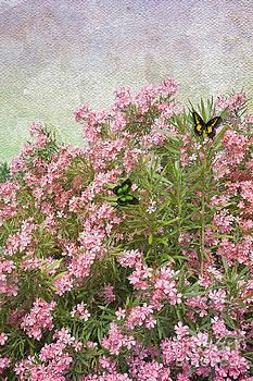 Liane Wright - Flower - Pink Oleander