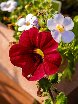 Flower Pot by Heather Sylvia