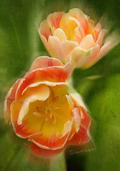 Flower Power Revisited by Terri Harper