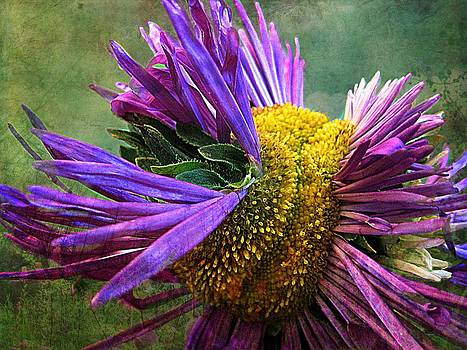 Flower Power by Shirley Sirois