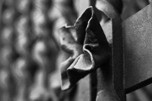 Flower by Rafa Soriano