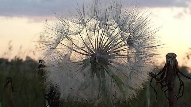 Flower seeds against the sky. by Anne Peters