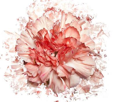 Flower shattered by David Heger