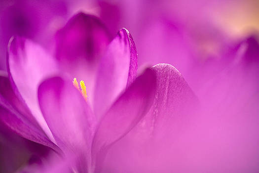 Flower Study by Istvan Nagy