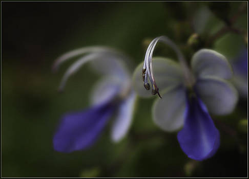 Flower by Teresa Moore