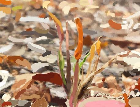 Flower Universe Portrait by Max Kutz