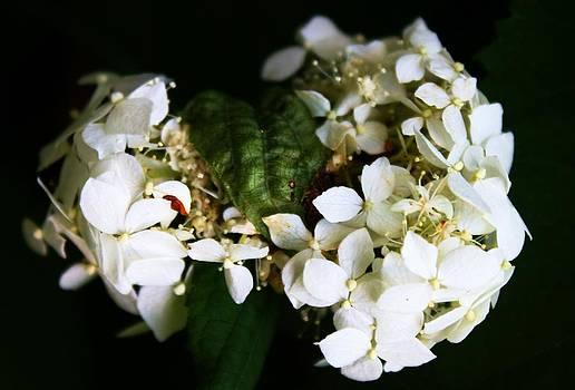 Flower With A Twist by Pierre Labrosse