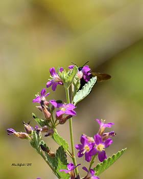 Allen Sheffield - Flower with Bee