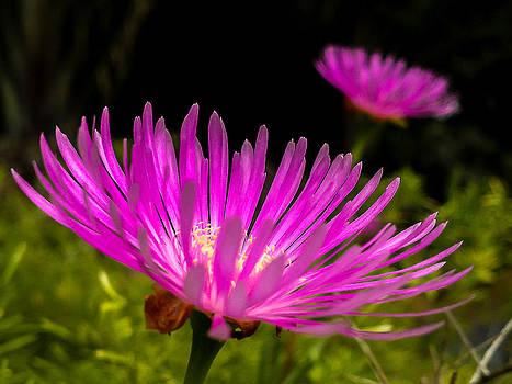 Flower1 by Fabio Giannini