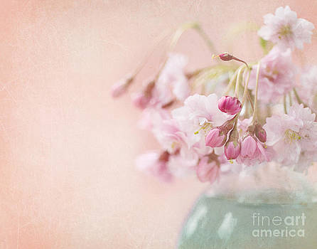 Flowering Cherry  by Dolly Genannt