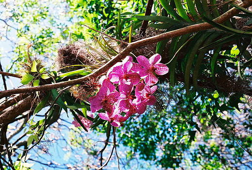 Flowering Tree by Bess Yearsley