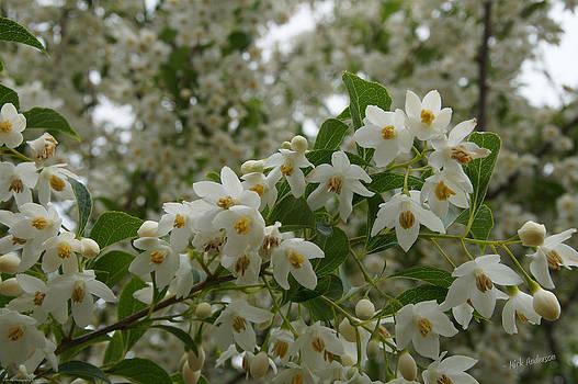 Mick Anderson - Flowering Tree