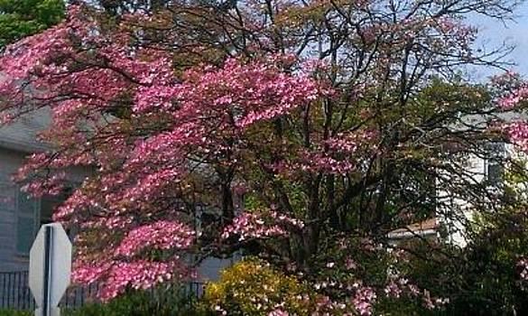 Flowering Tree by Theresa Crawford