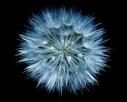 Flowering Weed 001 by Todd Soderstrom