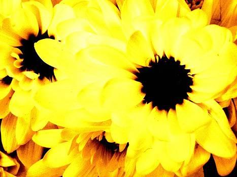 Flowers 2 by Jason Michael Roust