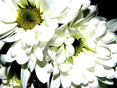 Flowers 3 by Jason Michael Roust