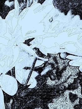 Flowers 7 by Jason Michael Roust