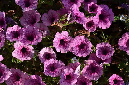 Flowers by Brett Geyer