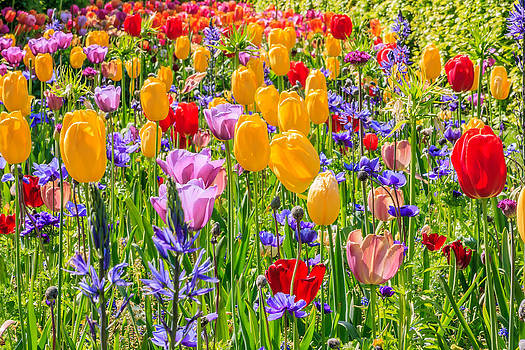 Flowers everywhere by Susan Leonard