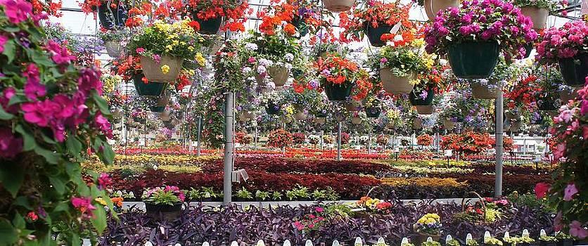 Flowers Galore by Kristine Bogdanovich